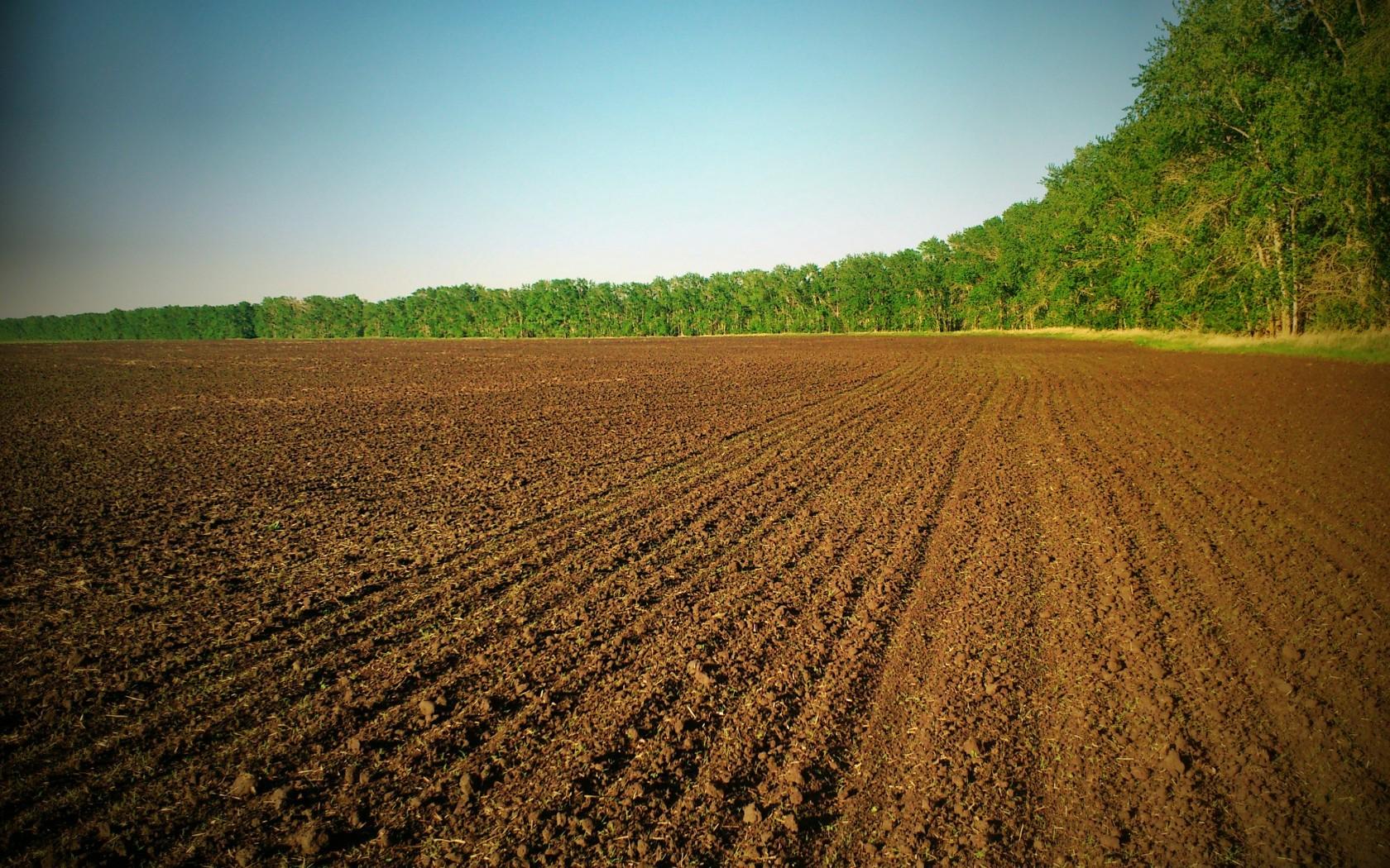 Чому потрібна заборона продажу земель сільськогосподарського призначення?